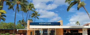 Rainworks at the Waikiki Aquarium